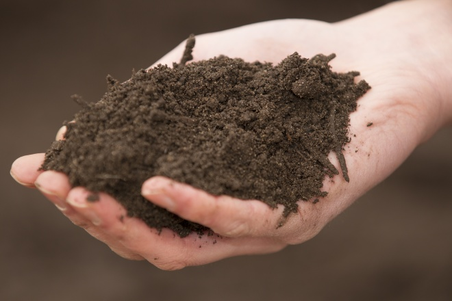 Soil in the hand of a gardener