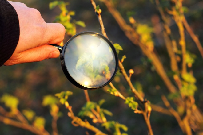 closer thorough inspection/ gardener sees green shoots through a magnifying glass at sunset