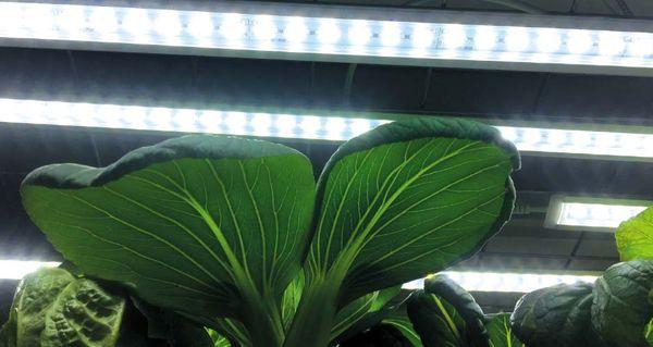37411_Nelson_garden_LED_Plantelys__Lyslist_startpa_1