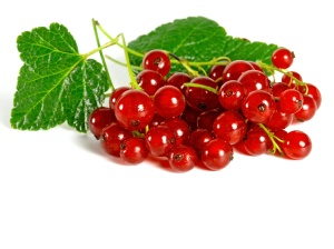 summer fruits: redcurrant