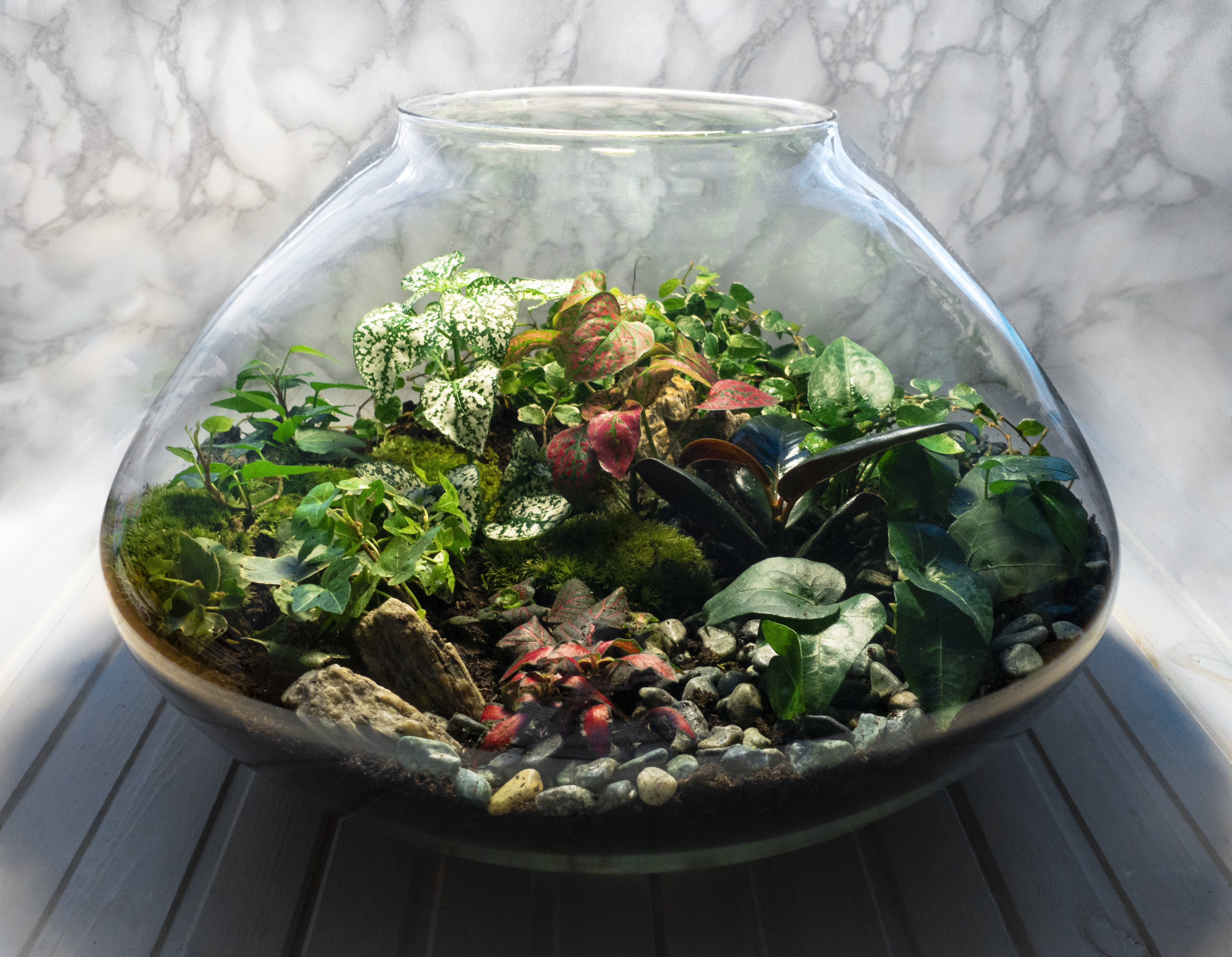 Small decoration plants in a glass bottle/garden terrarium bottle/ forest in a jar. Jar with piece of forest with self ecosystem. Save the earth concept