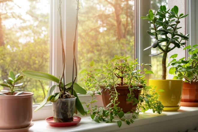 potted indoor plants on sunny home windowsill