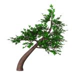bonsai 8-8